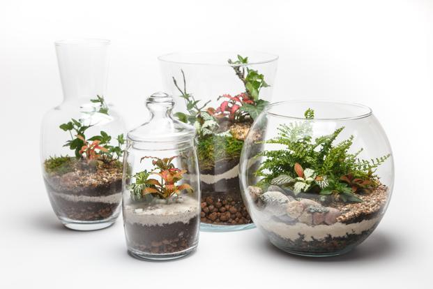 mini gardens for desks